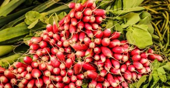 Crescimento, produtividade e qualidade de rabanete