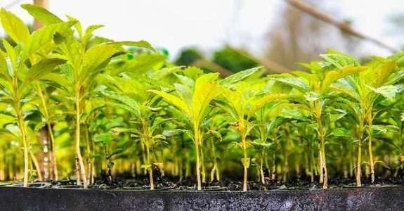 Lei de cultivares e produção de insumos biológicos no País continuam em discussão