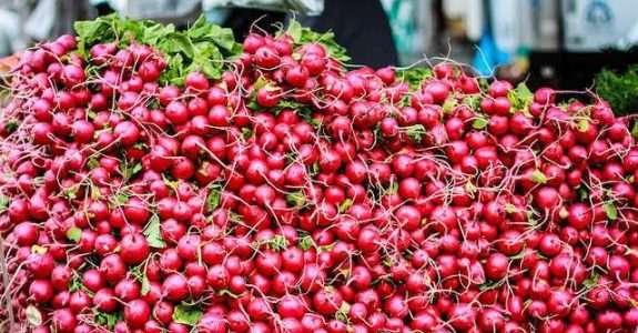Rabanete orgânico sob diferentes fontes de adubos orgânicos