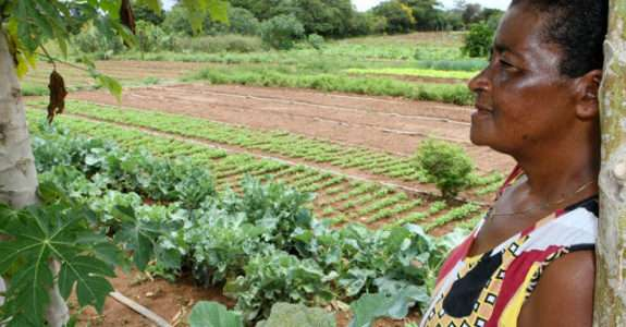 Agricultura orgânica: características do produtor