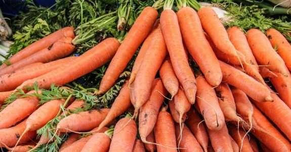 Caracteres de cenoura em cultivo agroecológico