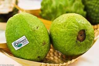 Qualidade de goiabas ensacadas e manejadas com produtos fitossanitários
