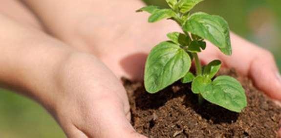 Aprenda como se faz substrato para mudas