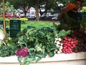 Produção orgânica municipal: dinâmica econômica e desenvolvimento sustentável