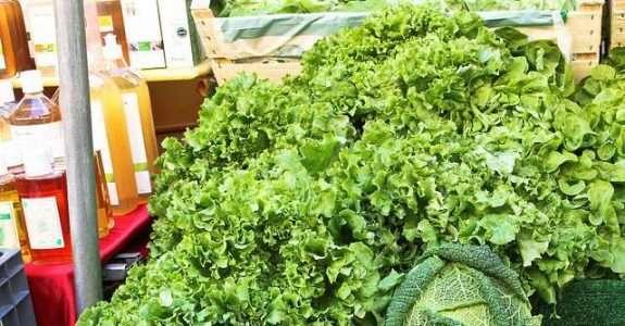 Produção orgânica de hortaliças: oportunidade de produzir alimentos saudáveis