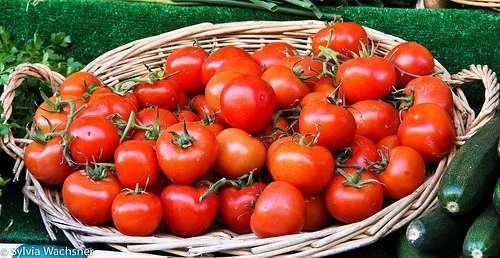Classificação do tomate de mesa cultivado nos sistemas convencional e orgânico