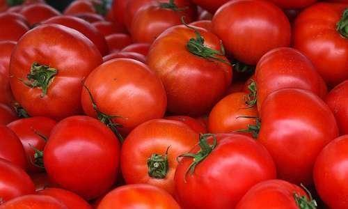 Papel da biodversidade no manejo da traça de tomateiro