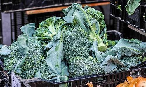Influência das embalagens em brócolis orgânicos, minimamente processados