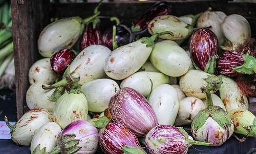 Tomates orgânicos, com sustentabilidade
