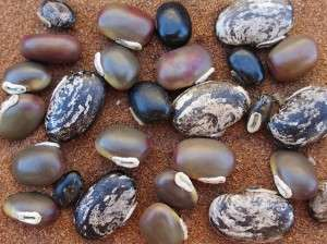 Orgânicos poderão ser produzidos com sementes convencionais