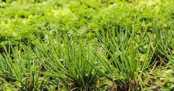 Hortaliças: cuidados da obtenção da semente até a comercialização dos produtos