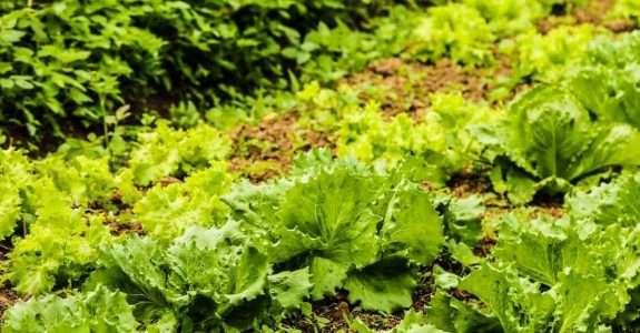Vida e trabalho na conversão para agricultura orgânica