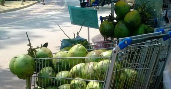Indústria do coco cresce, mas gera alto desperdício