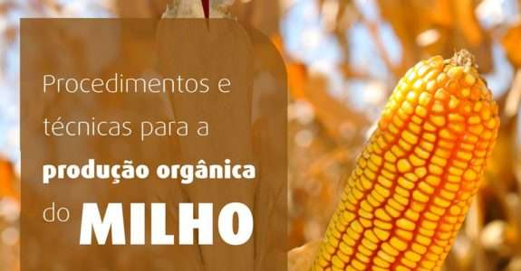 Produção de milho orgânico