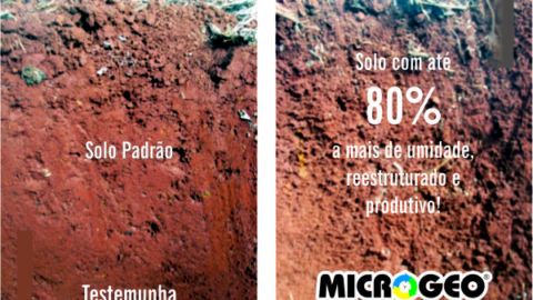foto: Microgeo