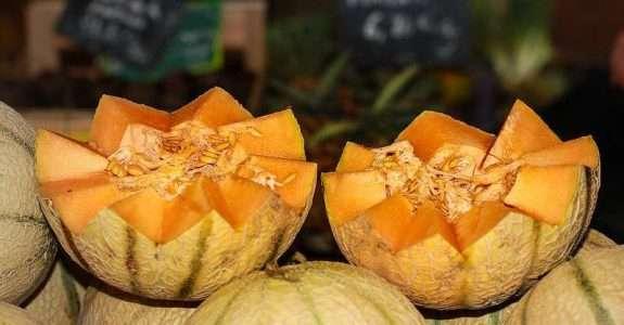 Cultivo de melão utilizando compostos orgânicos