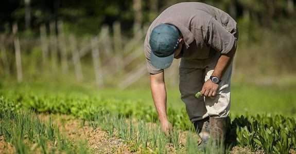 SP anuncia política municipal de segurança alimentar