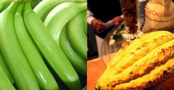 Peru: Exportação de alimentos orgânicos