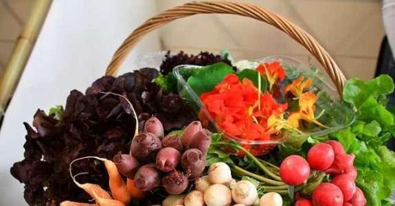 Agricultura orgânica cresce com pesquisa