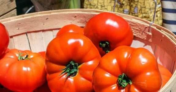 Controle da requeima do tomateiro