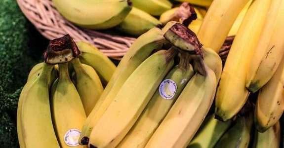 Avaliação e elaboração de banana-passa, cultivos orgânico e convencional