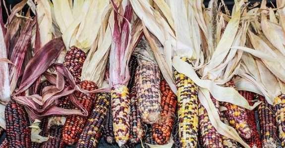 Qualidade de milho verde cultivado em sistemas de produção orgânico e convencional