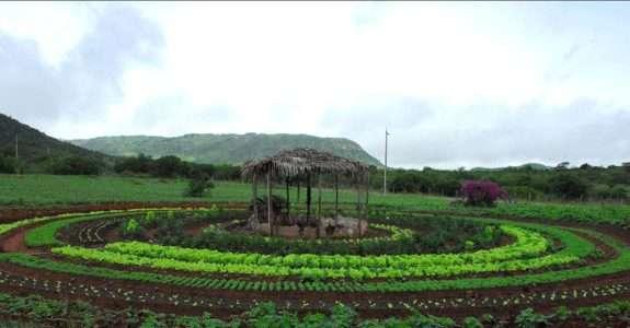 Projeto PAIS busca favorecer relação da agricultura familiar com a agroindústria