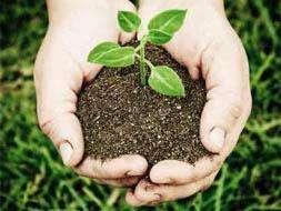 A reconstrução ecológica da agricultura