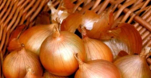 Análise sistemas de produção de cebola: orgânico e convencional