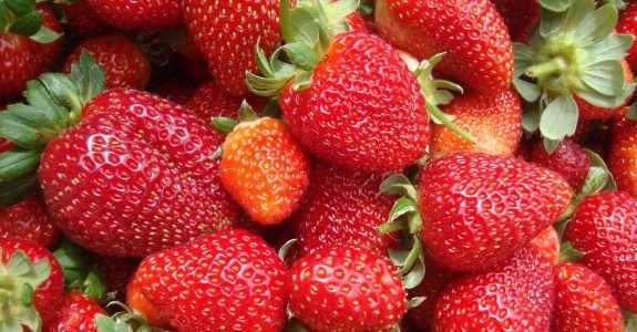 Produtor do ES desenvolve sistemas de cultivo de morango sem agrotóxico
