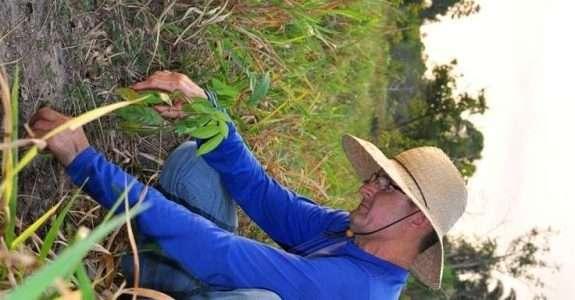 Propriedade de pecuária de corte de Rondônia é modelo em sustentabilidade