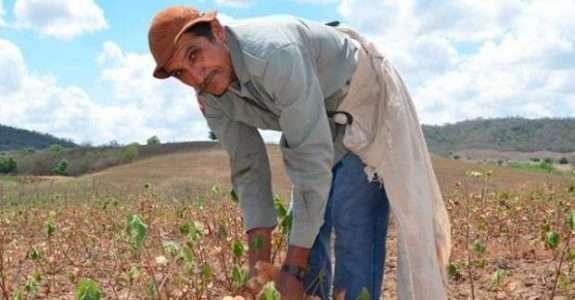 Mais cor: algodão diferenciado pode dar mais lucro e proteger o meio ambiente