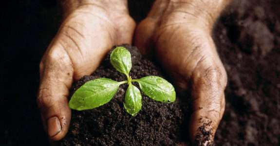 Agroecologia e o conceito de agricultura sustentável