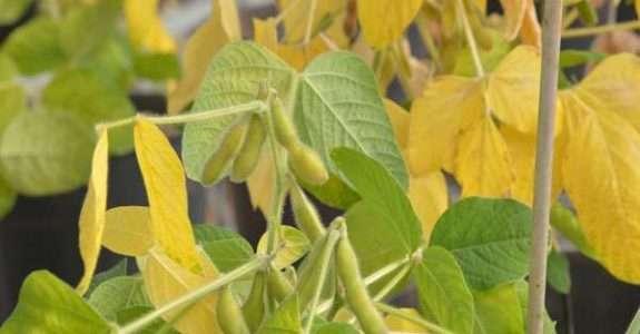 Uso de agrotóxicos subiu 162% em 12 anos de acordo com pesquisa