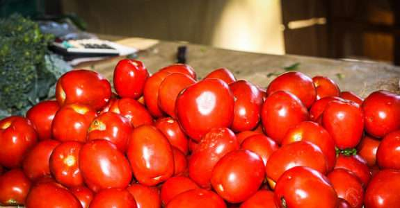 """2ª Oficina """"Tomates orgânicos combinam com trichodermas?"""""""