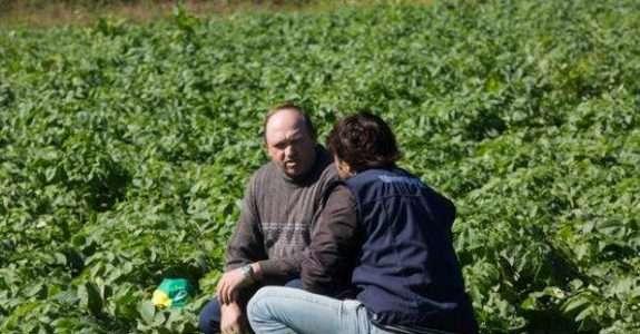 MDA lança edital de ATER para agricultores familiares produtores de sementes crioulas
