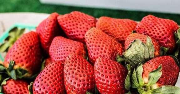 Sistema orgânico de produção de morango