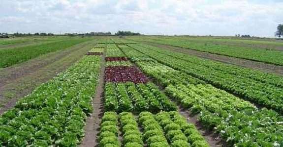 Argentina: segundo produtor mundial de orgânicos