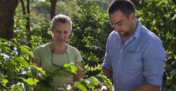 Agricultura biodinâmica: método agrícola de produção relaciona fases da lua e signos do zodíaco