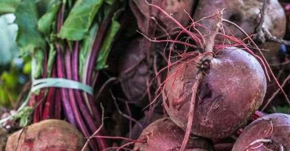 Agricultura familiar e reforma agrária: os maiores produtores de orgânicos do país