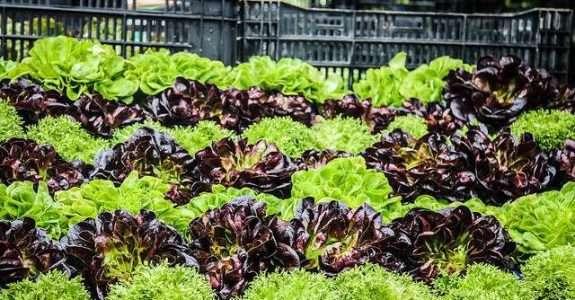 O mercado de orgânicos