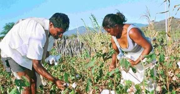 Produção orgânica fortalece mulheres no sertão do país