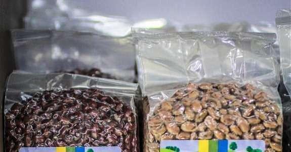 Comportamento de feijoeiro em conversão para sistema orgânico