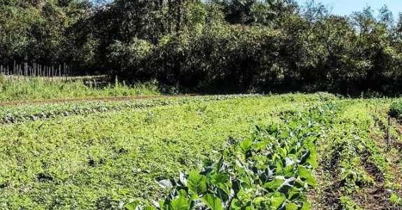 Agricultura Orgânica – expandindo o conhecimento