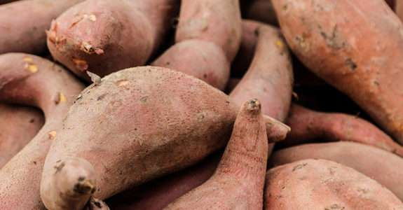 Cultivo orgânico de batata doce