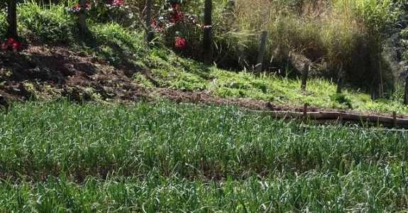 Práticas alternativas para a produção agropecuária – agroecologia