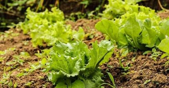 Adubação Biológica é alternativa de redução de custo na lavoura