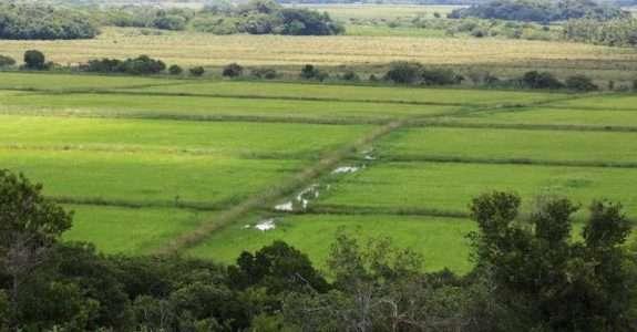 Brasil já tem mais de 14 mil unidades de produção orgânica
