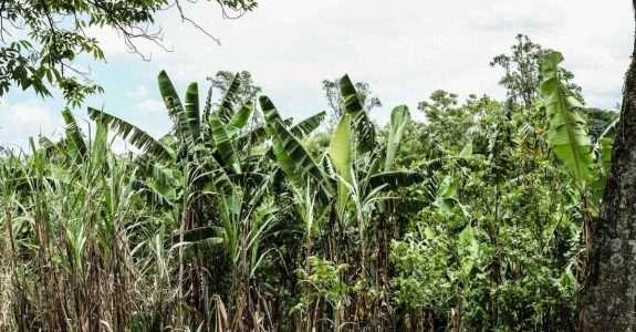 Como o reflorestamento pode se tornar um negócio lucrativo