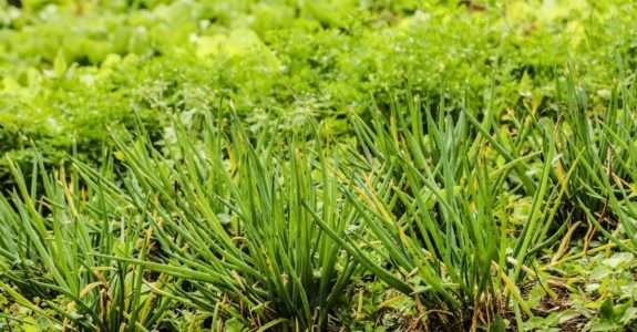 Agroecologia garantindo a segurança alimentar